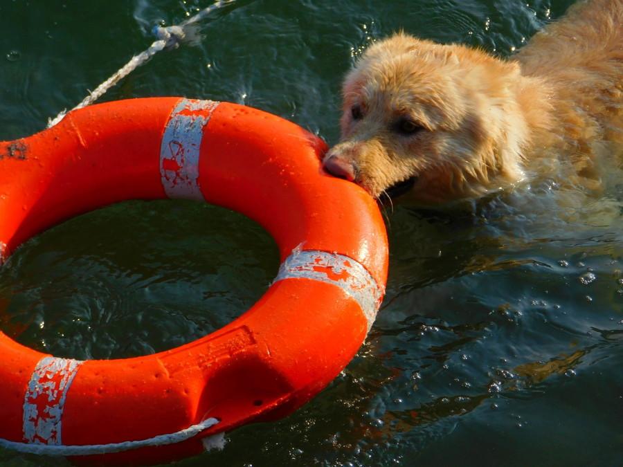Come addestrare un cane: consigli, regole, corso