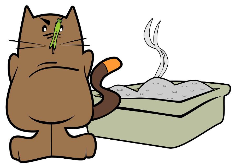 Lettiera per gatti: come scegliere la migliore